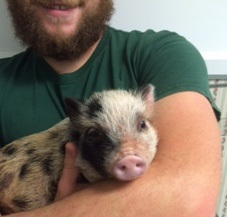 Baby Pig Pic